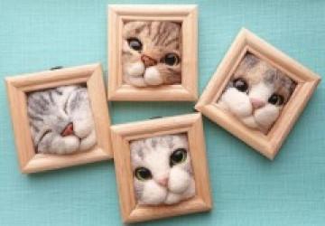 'Mèo béo mắc kẹt trong khung ảnh' - bộ sưu tập khiến dân mạng 'chết mê'